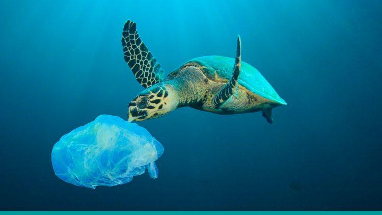 Sigue estos sencillos pasos, ¡y reduce tu consumo de plásticos!