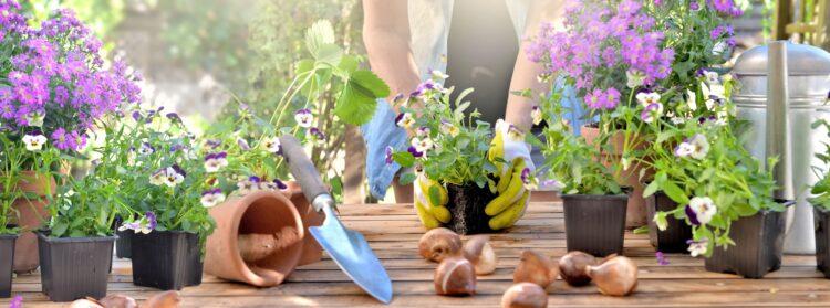 ¡Cuida tus plantas este verano!